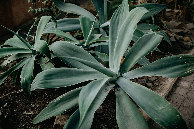 vetplant plantentuin Meise
