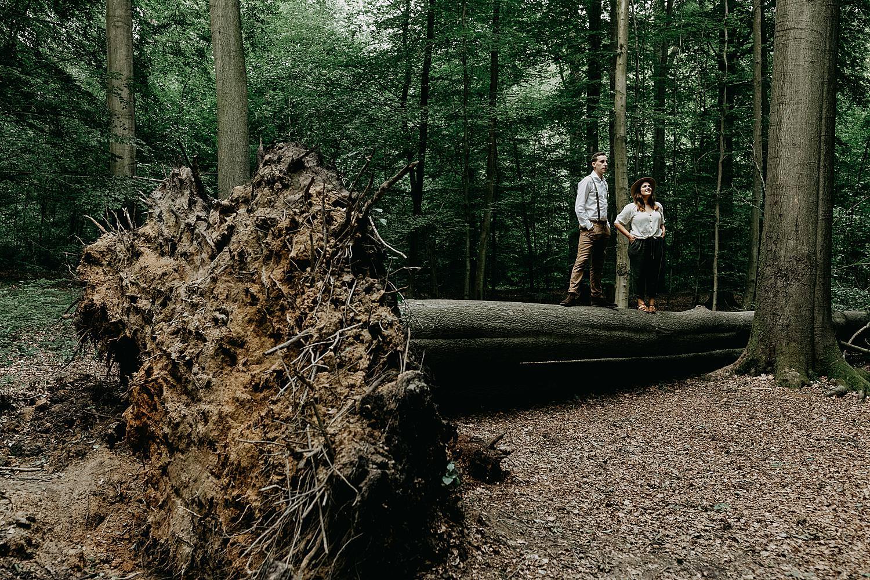 Koppel op grote omgevallen boom