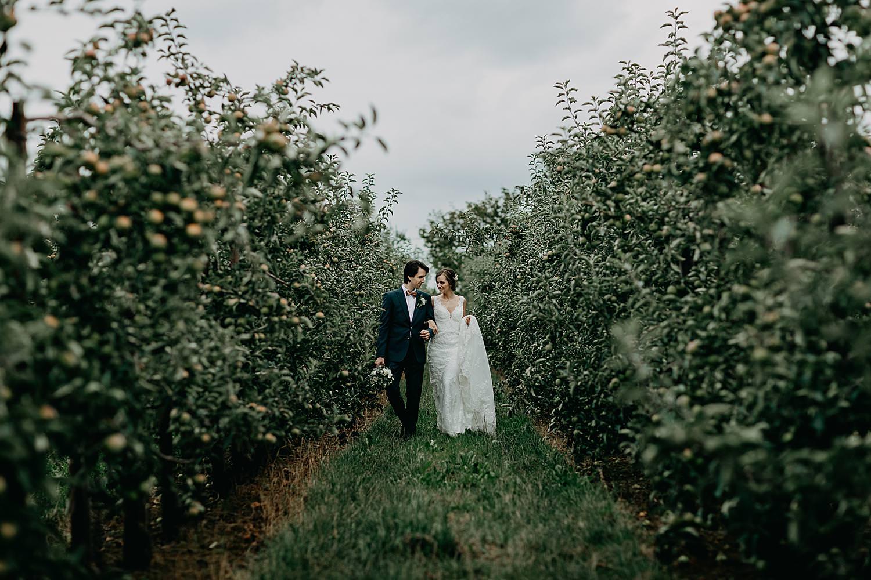 bruidspaar wandelt tussen appel plantages
