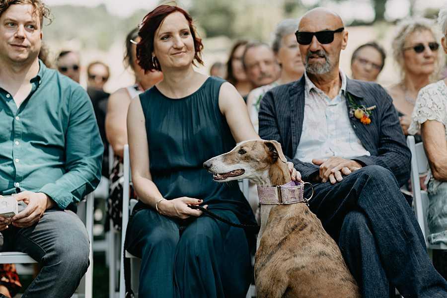 Wijnkasteel Genoelselderen buitenceremonie huwelijk windhond bruidspaar