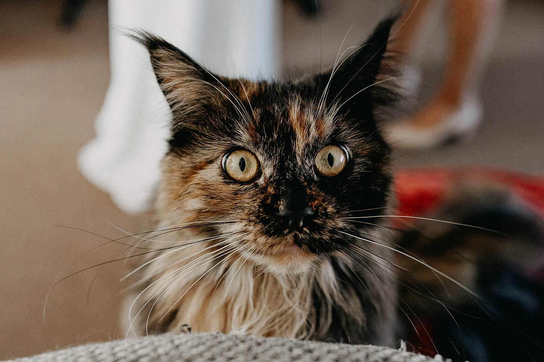 Zonhoven kat voorbereiding huwelijk