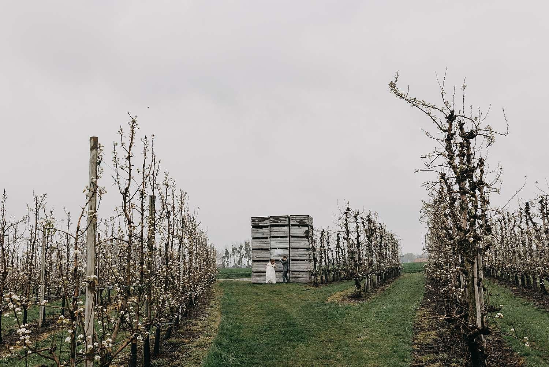 Huwelijksreportage bruidspaar in fruitplantage