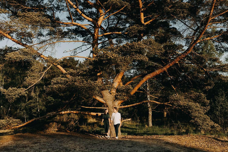 Koppel onder dennenbomen Kalmthout